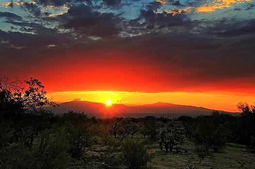 Sunrise In Tucson by Kimmi Craig