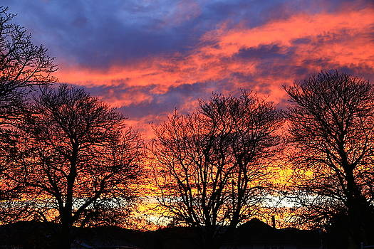 Sunset and Filigree by Nareeta Martin