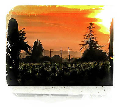 Sunset in the Vineyards by Leslie Hunziker