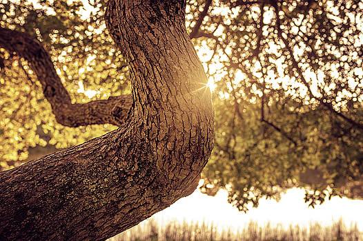 Lorrie Joaus - Sunset on a tree