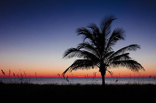 Sunset Palm by Sean Allen