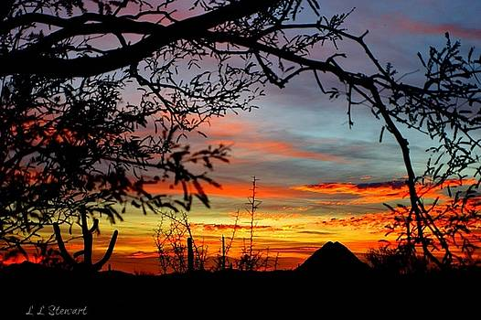 Sunset Through The Mesquites by L L Stewart