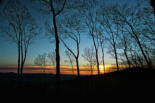 Sunset Trees by George Taylor