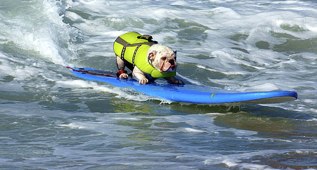Surfing Dog by Thanh Thuy Nguyen