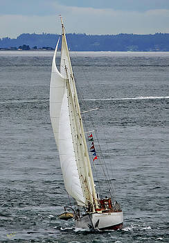 Suva Under Sail by Rick Lawler