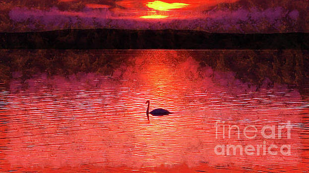 Swan in the sunset painting by Odon Czintos