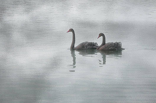 Swan Lake by Carolyn Dalessandro