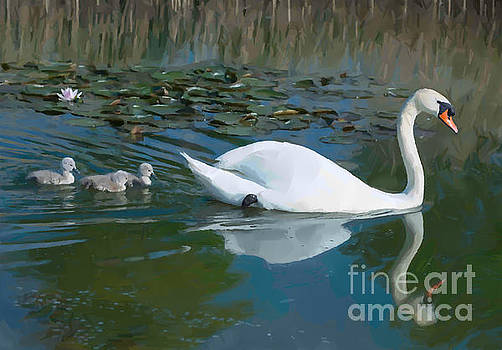 Swan with cygnets by Andrew Michael