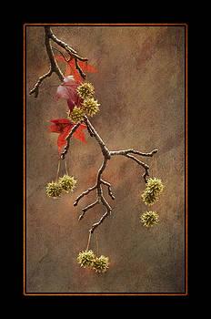 Autumn Sweetgum 1 by Lauren Brice