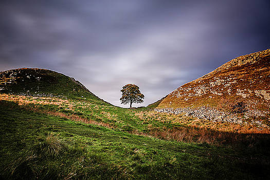 Sycamore Gap during sunset. by Kelvin Trundle