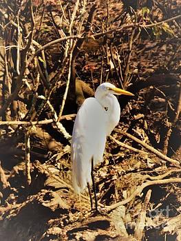 Tall Beautiful White Egret by Deborah Chase