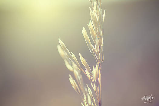 Tall Grass by Adnan Bhatti