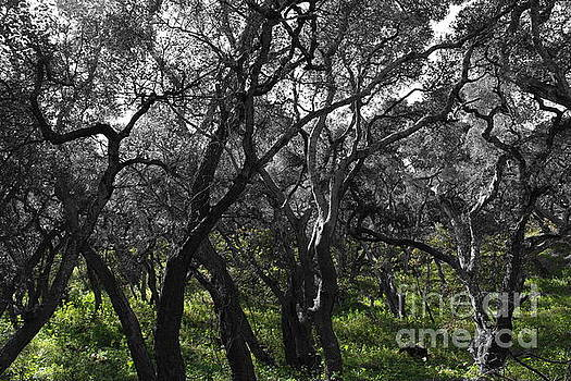 Tangled Trees by Katherine Erickson