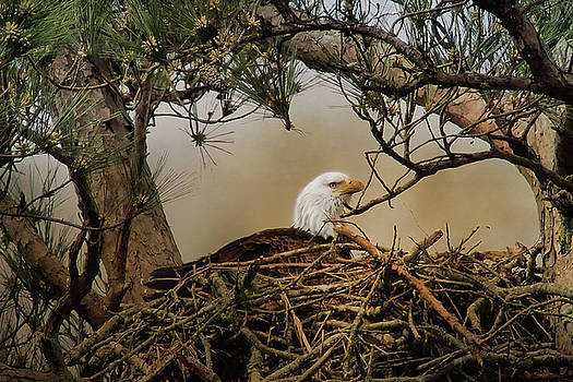 Tending The Nest by TnBackroadsPhotos