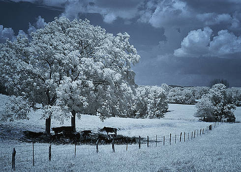 Tennessee Farmland by Jim Cook