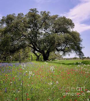 Texas Wildflowers by Cathy Alba
