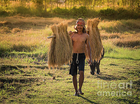 Thai farmer carrying the rice on shoulder after harvest. by Tosporn Preede