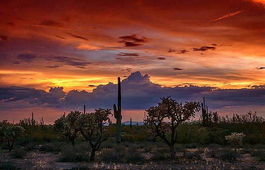 The Beauty of the Southwest  by Saija Lehtonen