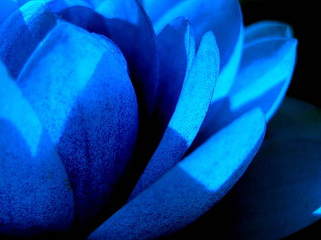 The Blue Lilly by Catherine Natalia  Roche