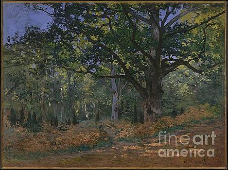 Celestial Images - The Bodmer Oak, Fontainebleau Forest