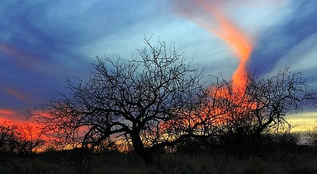 The Desert Sky by Kimmi Craig