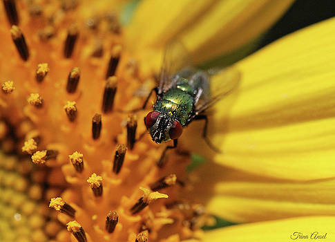 The Fly by Trina Ansel