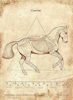 The Horse's Canter Revealed by Catherine Twomey