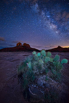 The Impractical Cactus by Larry Pollock