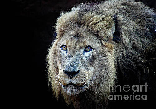 The King by Lisa L Silva