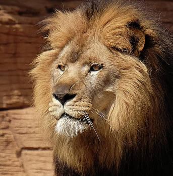 The King by Ronda Ryan