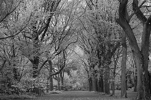 The Mall - Central Park Alley by Zina Zinchik