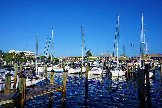 The Naples City Dock by Robb Stan