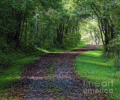 The Old Road by Paul Mashburn