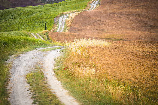 The path by Stefano Termanini