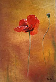 The Poppies by Ewa Gawlik