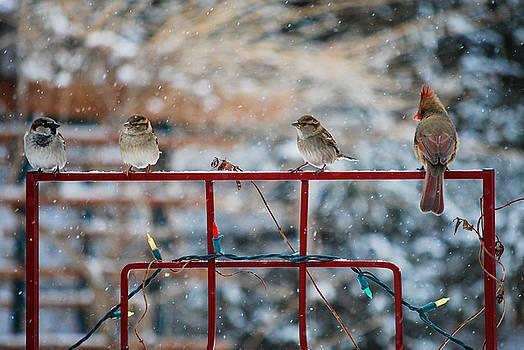 The Quartet by Patricia Gapske