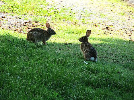 The Rabbit Dance by Digital Art Cafe