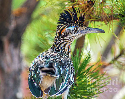The Roadrunner by Stephen Whalen