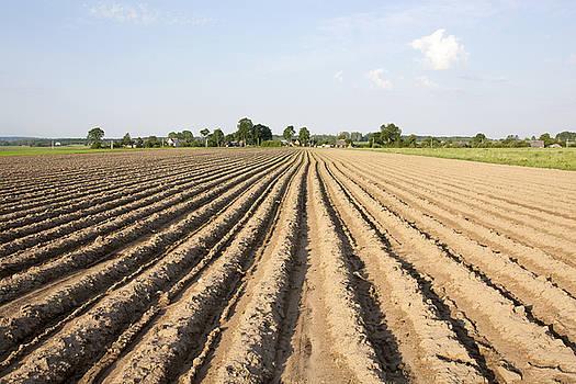 Ramunas Bruzas - Agriculture