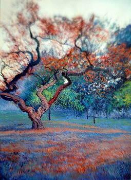 The spring by Abid Khan