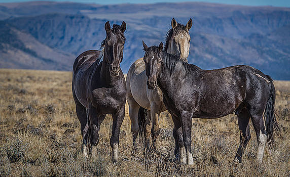 Three Amigo's by Joe Hudspeth