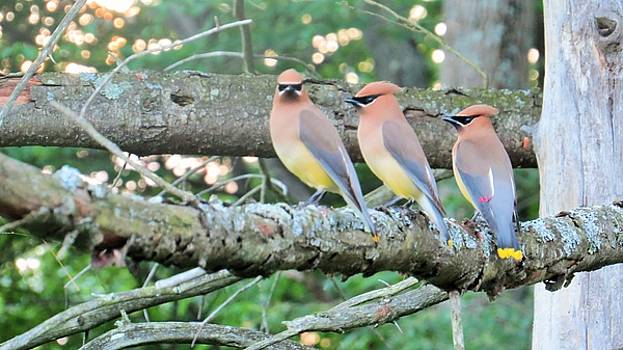 Three in a Row by Jeanette Oberholtzer
