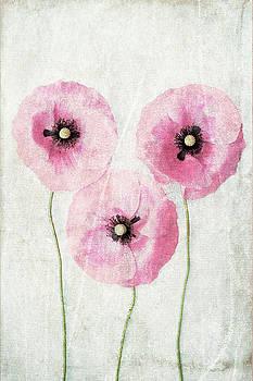 Three Poppies by Maria Heyens