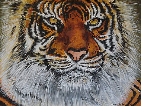 Tiger Face by Laura Bolle