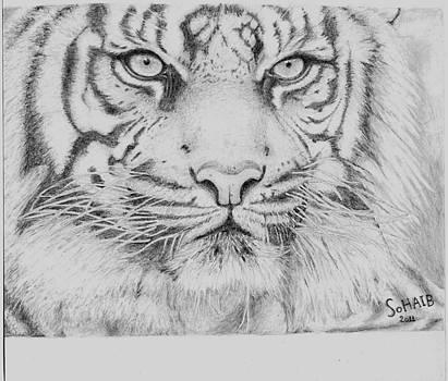 Tiger by Sohaib Benachour