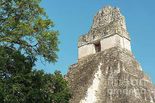 Tikal Guatemala Ruins by Tim Hester
