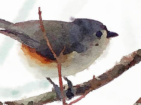 Titmouse by Kenna Westerman