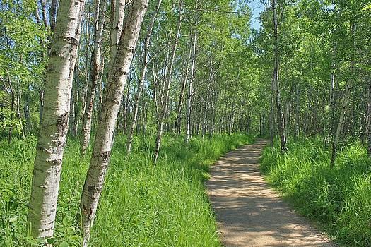 Trail Through Aspens by Jim Sauchyn