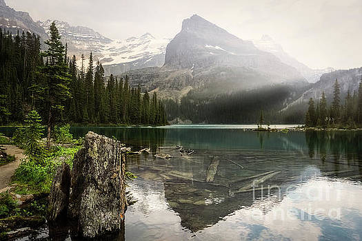 Tranquil Beauty by Carrie Cole