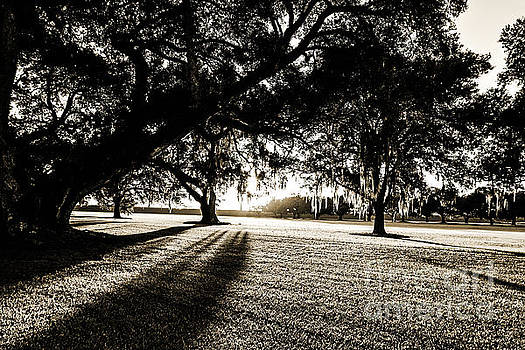 Scott Pellegrin - Tranquility Amongst the Oaks - sepia